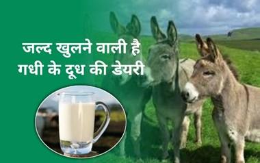 7000 रुपए लीटर बिकता है गधी का दूध, देश में जल्द खुलेगी इसकी पहली डेयरी