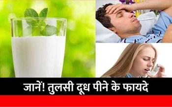 Basil Milk:  तुलसी दूध पीने से दूर होते हैं ये 5 रोग,  ऐसे करें सेवन