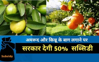 खुशखबरी: किसान 50% सब्सिडी के साथ लगाएं अमरूद और किन्नू के बाग, जानें आवेदन की प्रक्रिया