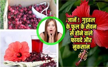 Hibiscus Benefits and Side-effects: गुड़हल के फूल के सेवन से होने वाले अद्भुत फायदे और खतरनाक नुकसान