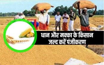 समर्थन मूल्य पर धान और मक्का की खरीद 17 अगस्त से होगी शुरू, इस राज्य के किसान करें पंजीकरण