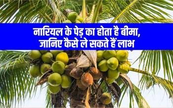 नारियल पेड़ बीमा योजना का उठाएं लाभ, किसानों को मिल रहा है मौका