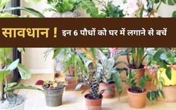 Negative Energy Indoor Plants: वास्तु शास्त्र में इन 6 पौधों को घर में लगाना है अशुभ, लाते हैं नकरात्मक ऊर्जा के साथ कंगाली