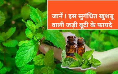 Health Benefits of Mint: पुदीने के सेवन से होने वाले अद्भुत फायदे, जो रखेंगे आपको स्वस्थ