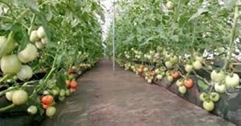 किराए की जमीन पर सब्जियों की खेती कर कमा रहे लाखों रुपए, जानें इस सफल किसान की कहानी