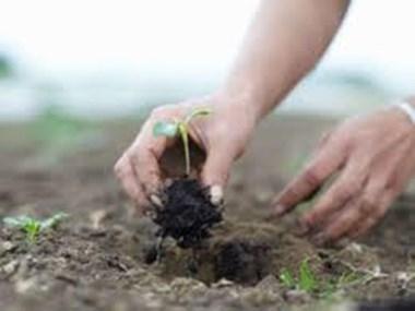 औषधीय गुणों से भरपूर हैं ये 2 पेड़, जानें इनकी खासियत