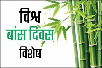 Bamboo Cultivation: बांस की खेती किसान बढ़ा रहे अपनी आमदनी, जानें इसकी उपयोगिता और महत्व