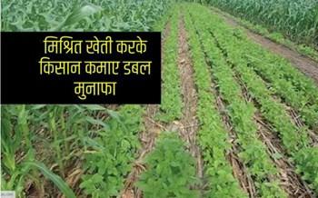 मिश्रित खेती करके किसान कमाए डबल मुनाफा, ये हैं विधि
