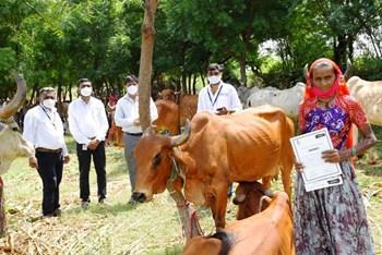 सुमिंतर इंडिया आर्गेनिक्स ने किया देसी गाय का वितरण