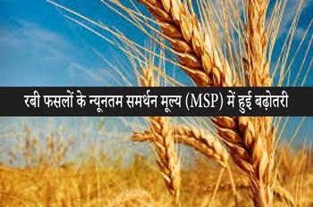 खुशखबरी ! मोदी सरकार ने किसानों को दिया तोहफा, रबी फसलों के MSP में हुआ इजाफा