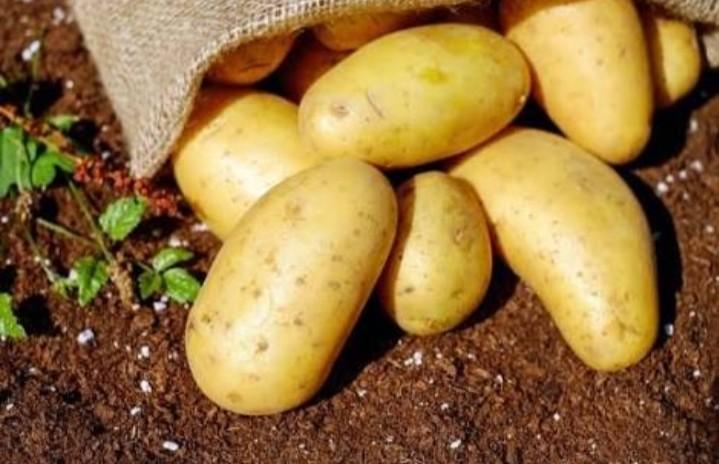 Potati Sowing
