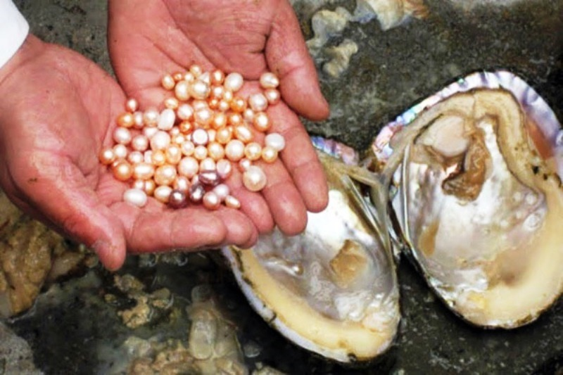 Pearl Farming