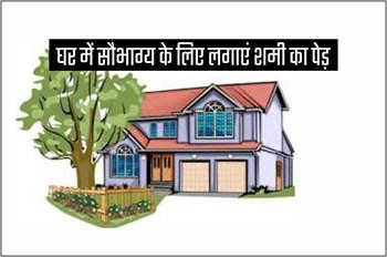 घर में पूर्वोत्तर दिशा में लगाएं शमी का पौधा, जीवन में हमेशा रहेगी सकारात्मक ऊर्जा