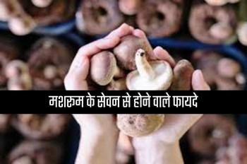 Mushroom Eating Benefits: सेहत के लिए वरदान है मशरूम का सेवन, जानें इसके गजब फायदे
