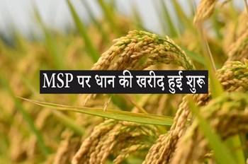 खुशखबरी ! MSP पर धान की खरीद हुई शुरू, केंद्र सरकार ने जारी किया आंकड़े