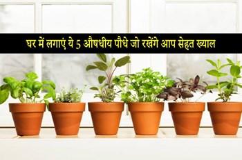 Indoor Medicinal Plants: घर में उगाएं ये 5 औषधियां पौधे