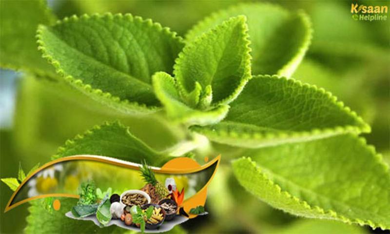 herbal plantation
