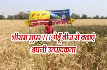 श्रीराम सुपर 111 गेहूँ बीज से मध्यप्रदेश के किसानों की बढ़ी उत्पादकता