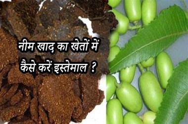मानव शरीर की तरह खेतों के लिए भी बहुत फायदेमंद है हरी नीम, ऐसे करें खेतों में इस्तेमाल