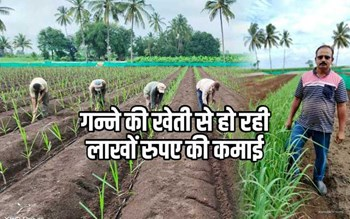 अनोखी पद्धति से ये किसान एक एकड़ से 1000 क्विंटल गन्ने की उपज ले रहा, लाखों रुपए की हो रही कमाई