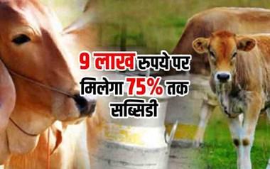 खोलिए गाय की Dairy, राज्य सरकार दे रही 75% तक सब्सिडी, 25 अक्टूबर तक करें आवेदन