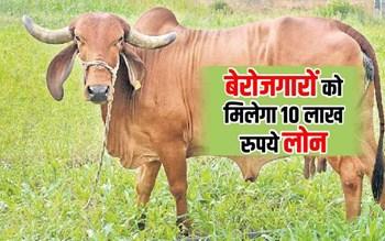 बेरोजगारों को गौ पालन के लिए मिलेगा 10 लाख रुपये तक का लोन