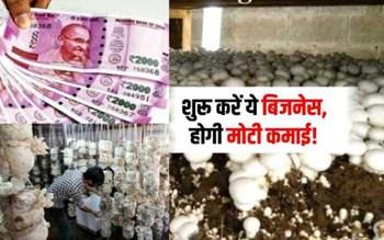 सिर्फ 5 से 6 हजार रुपए में शुरू करें Mushroom Farming  बिजनेस, हर महीने होगी मोटी कमाई