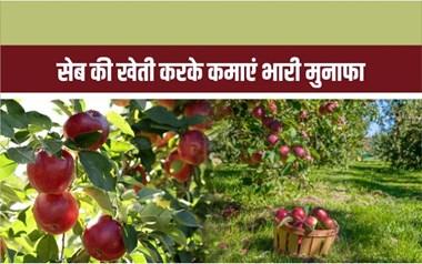 मैदानी क्षेत्र में सेब की खेती करके कमाएं भारी मुनाफा!