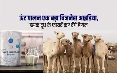 ऊंटनी के दूध से फायदे और इससे निर्मित उत्पाद