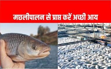 मछलीपालन के लिए 60 प्रतिशत सब्सिडी कैसे लें, आइए जानते हैं