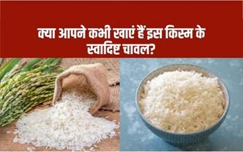 Delicious Rice Varieties: क्या आपने कभी खाएं हैं इस किस्म के स्वादिष्ट चावल?