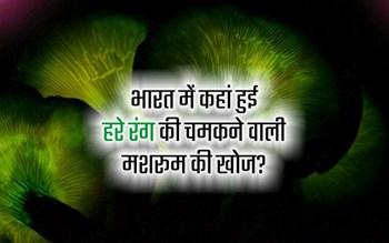 Shining mushroom: इस मशरूम की हर तरफ चर्चा, रात में बल्ब की तरह क्यों चमकती है हरे रंग ये मशरूम?
