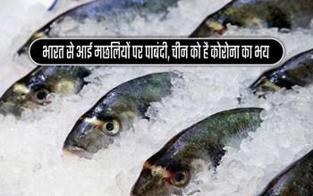 फिर तिलमिलाया चीन, भारत से आई मछलियों में बताया कोरोना, जानिए पूरी खबर