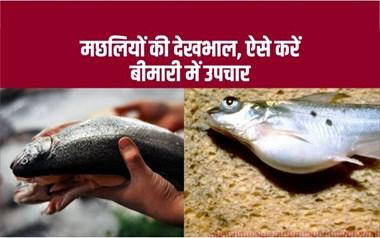 Caring of fish: मछलियों को होने वाली प्रमुख बीमारियां और उनके उपाय