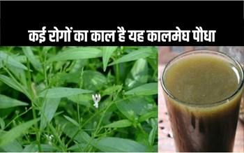 कालमेघ पौधे में छिपा है कई बीमारियों का रामबाण इलाज, इसके गुण जानना जरूरी