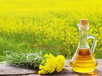 Mustard Oil Benefits: सरसों के तेल से मिलते हैं ये चमत्कारी फायदे
