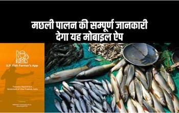 योगी सरकार ने लॉन्च की मछली पालकों के लिए मोबाइल ऐप