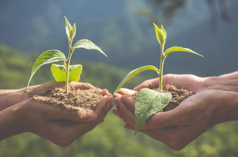 World Soil Day 2020