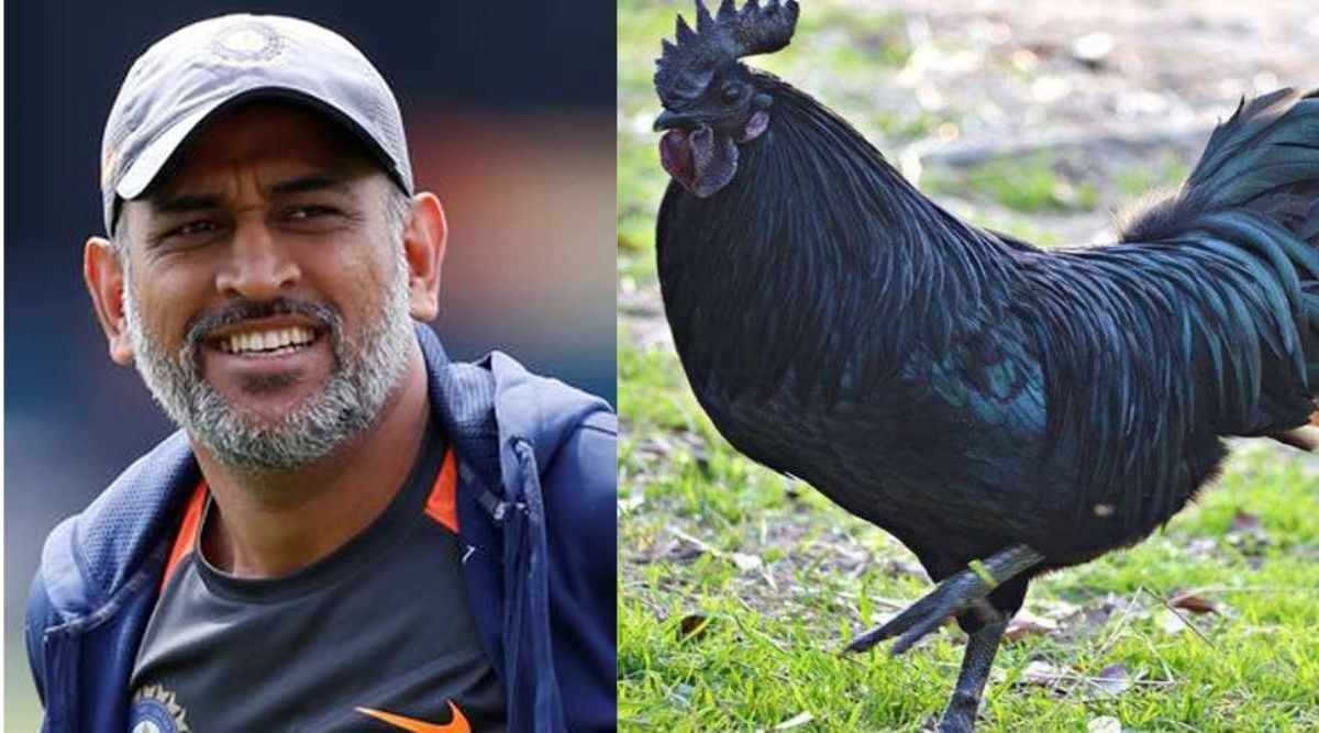 MS Dhoni and Farming