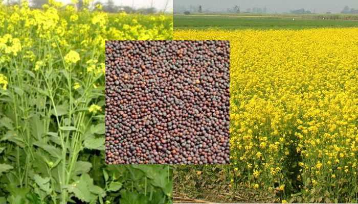 Agricultural Work of December