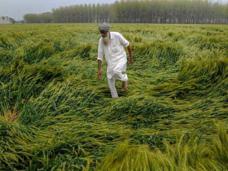 Crop damage by climate