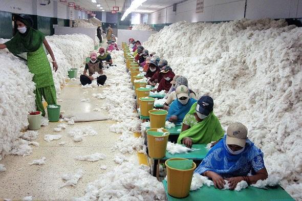 Cotton corporation