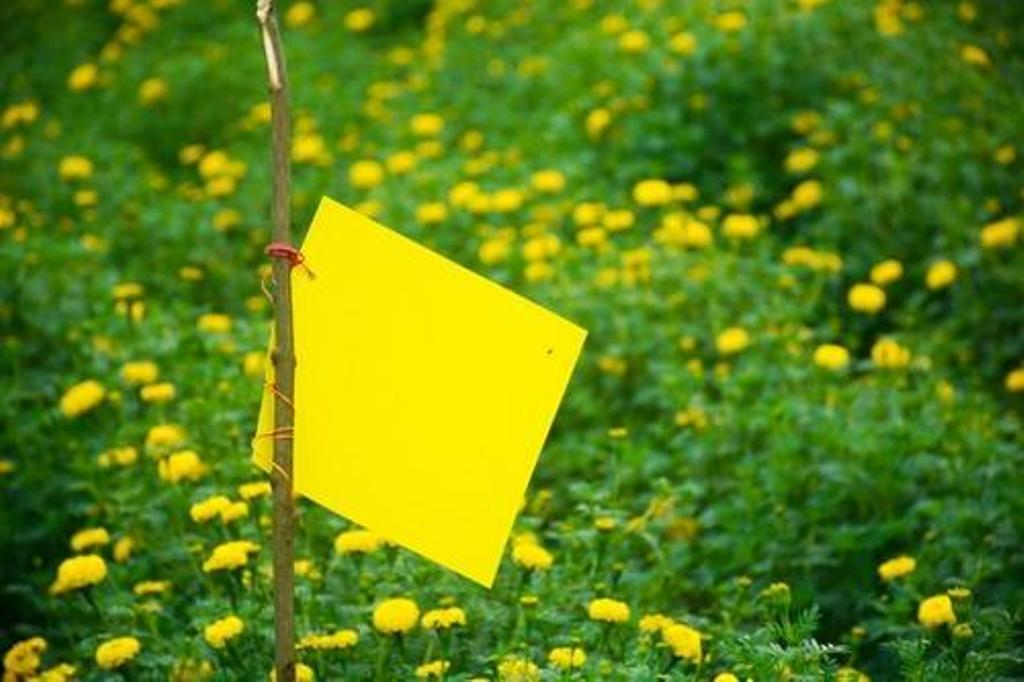 sticky traps for insects