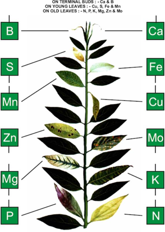 Nutrient Deficiency Chart