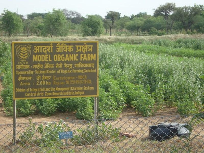 Organic Farm at CAZRI, Jodhpur
