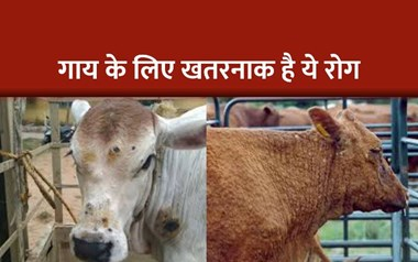 ये रोग गाय को देता है तनाव, दूध उत्पादन भी जाता है घट