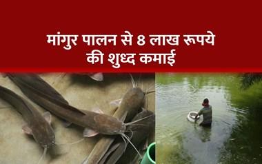 मांगुर मछली का पालन कैसे करें, आइये जानते हैं पूरी जानकारी