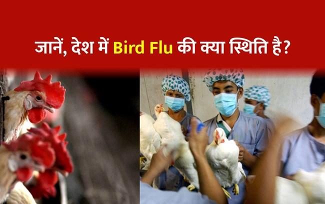 Bird Flu: देश के इन 11 राज्यों में हुई बर्ड फ्लू की पुष्टि