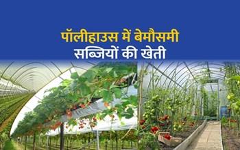 पॉलीहाउस (Polyhouse) में आधुनिक तकनीक से उगाएं बेमौसमी सब्जियां, पढ़िए इसका तरीका