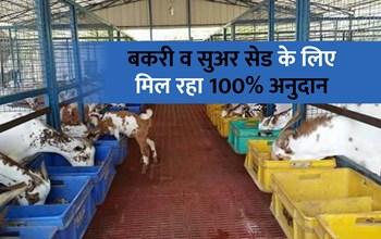 मनरेगा के तहत Free में करवाएं पशु शेड का निर्माण, विभाग दे रही है 100% अनुदान